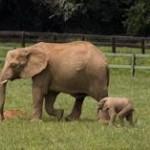 Cabarceno: in funivia tra orsi, bisonti e gorilla, 2 nuovi impianti LEITNER